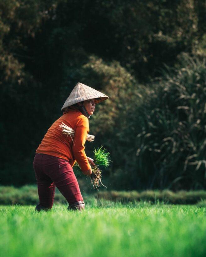 เยียวยาเกษตรกร ยังโอนเงิน 5000 ทุกวัน 4 แสนรายรีบแจ้งบัญชีด่วน! | The Thaiger