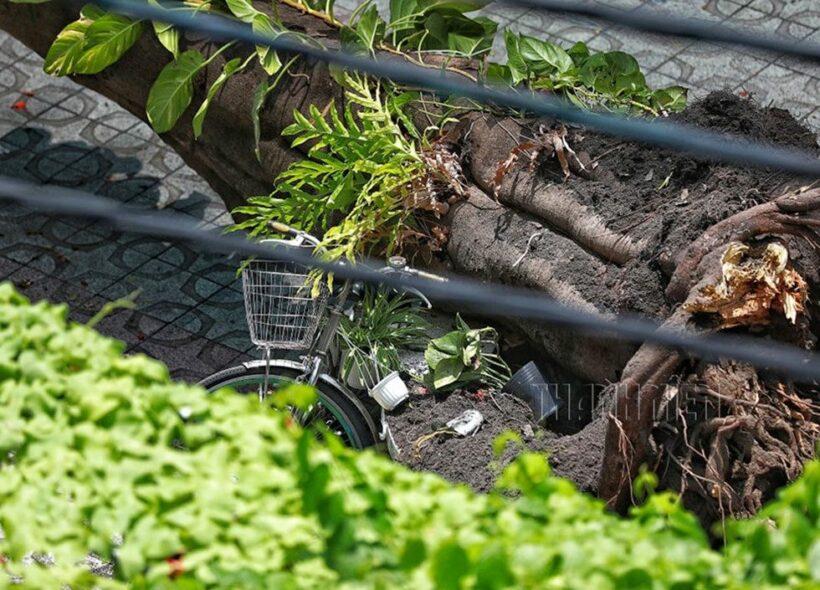 Cận cảnh hình ảnh vụ cây phượng bật gốc khiến 1 học sinh tử vong và 12 học sinh bị thương | News by The Thaiger