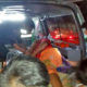 Elephant injures 2 Burmese men in Kanchanburi | The Thaiger