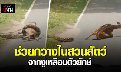 Netizens in uproar after man saves deer from python in Chon Buri – VIDEO | Thaiger