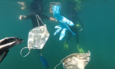 More masks, more problems: Covid waste pollutes oceans | The Thaiger