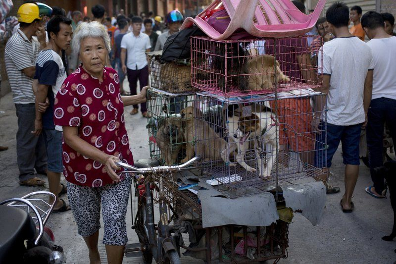 China's dog-meat festival opens for another year | News by Thaiger