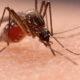 11 dead, 14,000 ill as rainy season worsens dengue fever outbreak in northeast   Thaiger