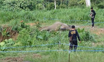 Baby elephants killed by electric fence in Chantaburi | The Thaiger