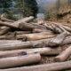 Officials investigate the illegal logging of 36 rai in Narathiwat | Thaiger