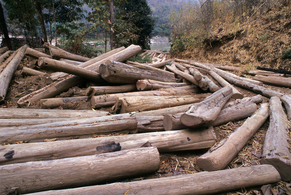 Officials investigate the illegal logging of 36 rai in Narathiwat   The Thaiger