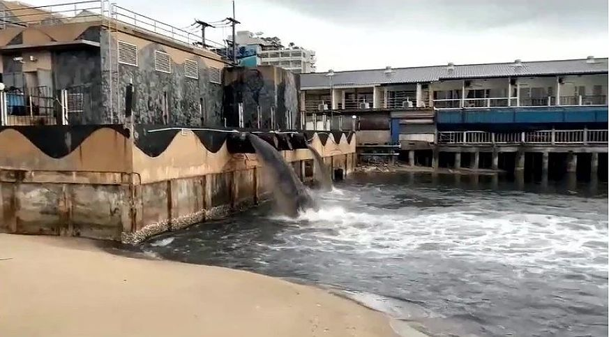 Pattaya mayor responds to video showing black water gushing into the sea next to Walking Street   The Thaiger