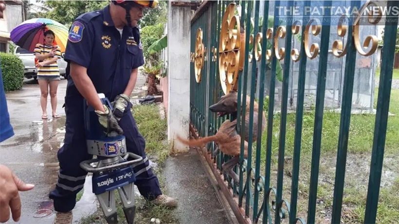 Pattaya soi dog, caught in fence, rescued | News by The Thaiger