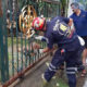 Pattaya soi dog, caught in fence, rescued | Thaiger