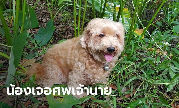 Dog finds missing owner's dead body in Central Thailand | The Thaiger