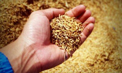 เยียวยาเกษตร.com เช็กวันโอนเงินเดือน ก.ค. -ใครผ่านอุทธรณ์บ้าง | The Thaiger