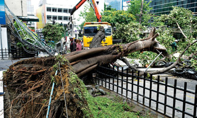 Bangkok removing trees to make way for underground walkways | The Thaiger