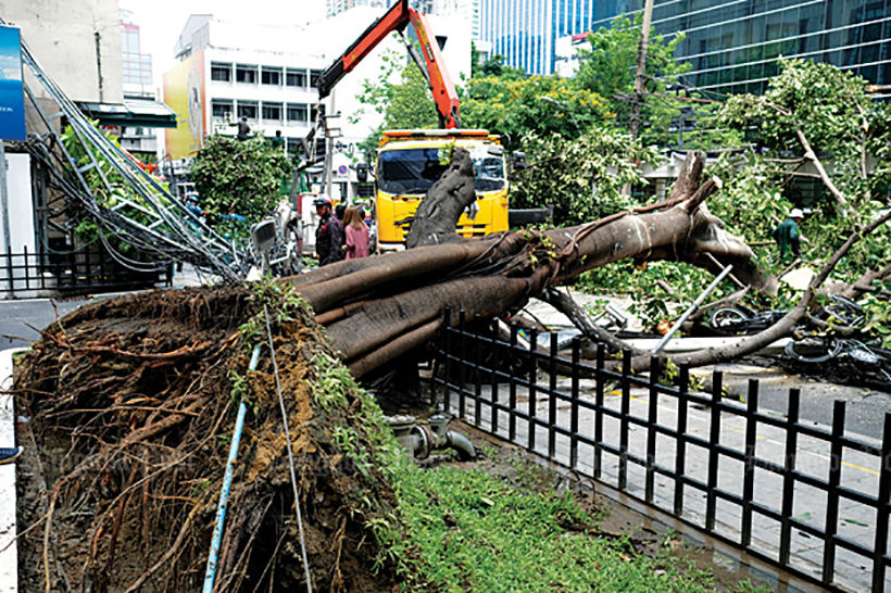 Bangkok removing trees to make way for underground walkways   The Thaiger