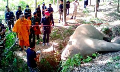 Man arrested for killing a wild elephant in southern Thailand | Thaiger