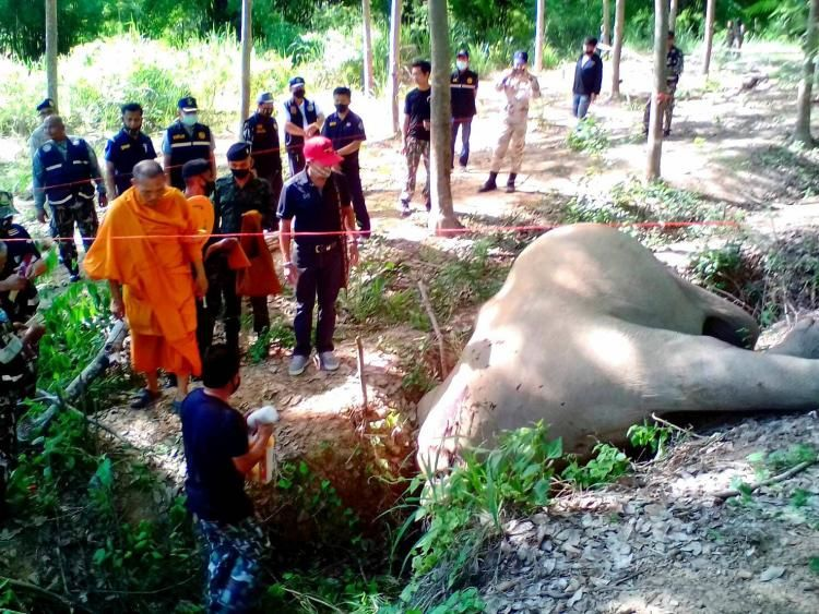Man arrested for killing a wild elephant in southern Thailand | The Thaiger