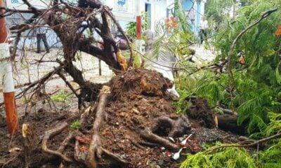 Đồng Nai: Cây phượng bật gốc trong sân trường khiến 3 nữ sinh bị thương | The Thaiger