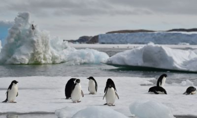 Antarctic penguins thrive around less icy waters | The Thaiger