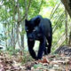 Rare big cats spotted in Thai national park | The Thaiger