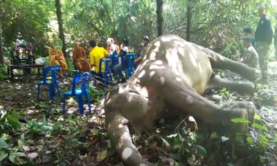 "Elephant's death prompts plea to ""say no"" to plastic bags 