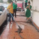 Huge monitor lizard pulled from Si Racha car | Thaiger