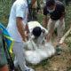 Isaan woman killed in landmine blast   Thaiger