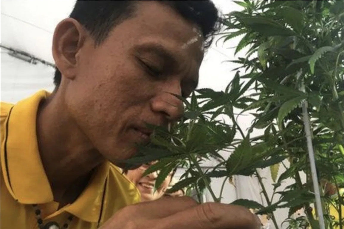Legally grown marijuana to boost medical field, economy   Thaiger