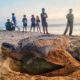 Lack of tourists sees return of endangered sea turtles to Koh Samui | Thaiger
