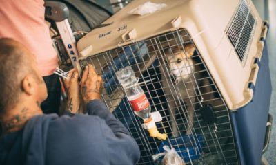Soi Dog Foundation is looking for flight volunteers | The Thaiger