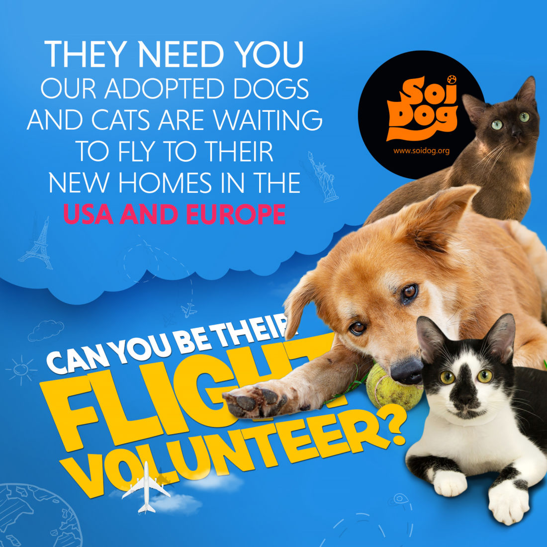 Soi Dog Foundation is looking for flight volunteers | News by Thaiger