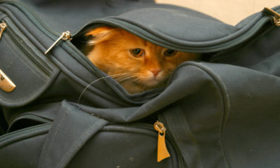 Can the Thai government put the cat back in the bag? | The Thaiger