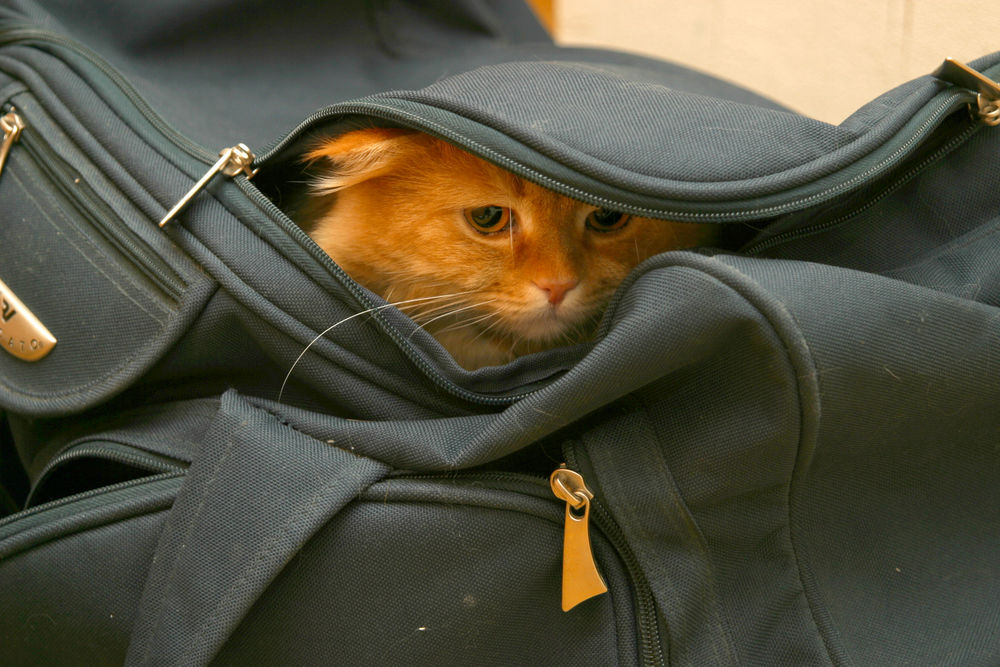 Can the Thai government put the cat back in the bag? | Thaiger