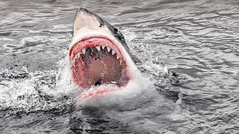 Aussie hailed as hero after fighting off shark to save wife | Thaiger