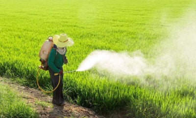 Thailand's ban on hazardous farming chemicals to remain in place | Thaiger