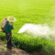 Health Ministry up in arms over possible return to toxic chemicals | Thaiger