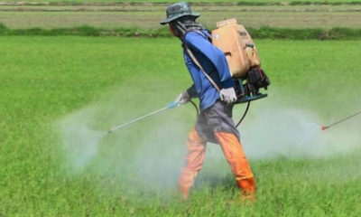 PM denies government split over toxic chemical ban | The Thaiger