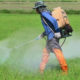 PM denies government split over toxic chemical ban | Thaiger