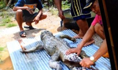 Crocodile attacks man, locals eat the reptile for 'revenge' | The Thaiger