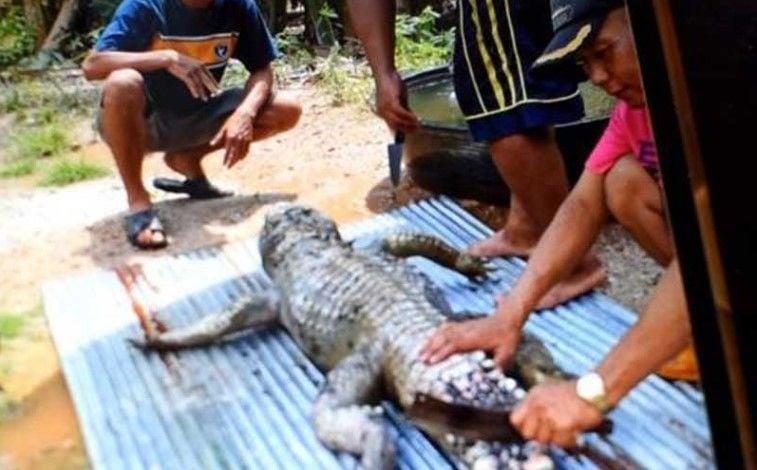 Crocodile attacks man, locals eat the reptile for 'revenge' | Thaiger