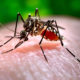 Dengue fever antibodies might contribute to Thailand's low Covid-19 count | The Thaiger