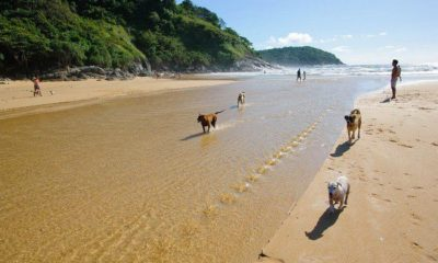 Phuket beach to ban pet dogs, but strays are okay | The Thaiger