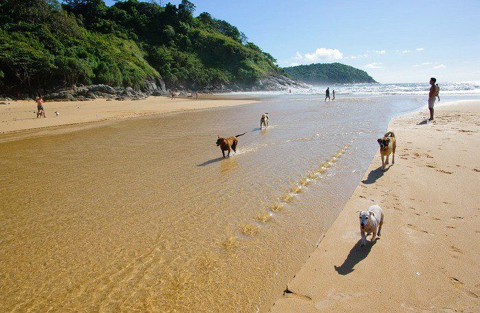 Phuket beach to ban pet dogs, but strays are okay | Thaiger