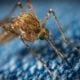 Dengue fever rises up to 6,024 in 4 Isaan provinces | The Thaiger