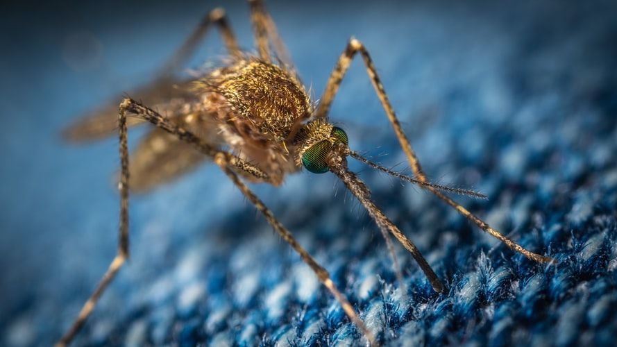 Dengue fever rises up to 6,024 in 4 Isaan provinces | Thaiger