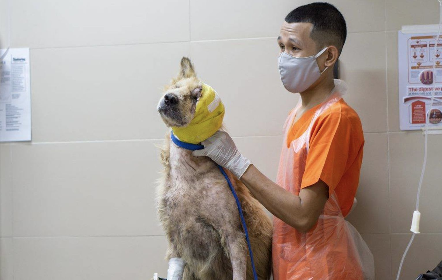 Phuket church group come to the rescue of suffering soi dog | News by Thaiger