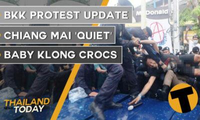 Thailand News Today | BKK protest update, Chiang Mai 'quiet', Baby klong crocs | October 14 | Thaiger