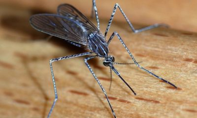 Lockdown may contribute to Thailand's rise in dengue fever cases, study suggests | Thaiger