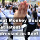 Thailand News Today | Coconut Business, Weekend protests, Pork dressed as Beef | November 13 | The Thaiger