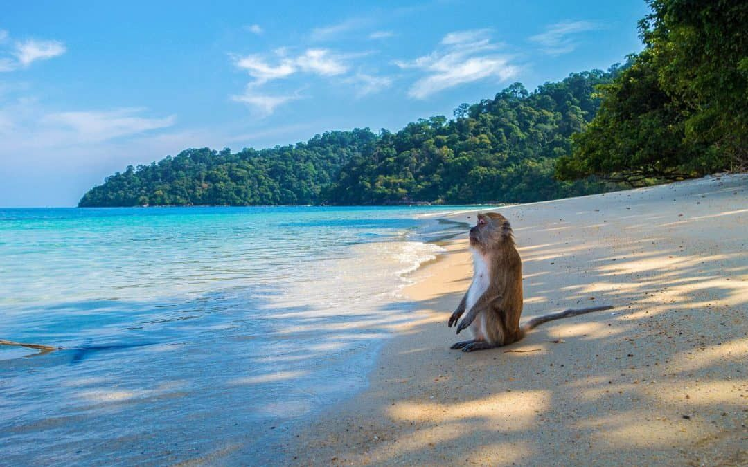 Rejoice Thailand. 681 tourists will arrive in November! | The Thaiger