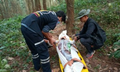 Third person killed by an elephant in the past month in Chon Buri's Bo Thong district | Thaiger