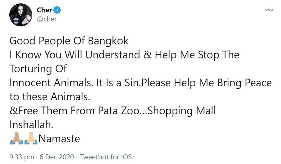 Cher calls for Thailand's only gorilla to be rescued after 30 years in Bangkok shopping mall zoo   News by Thaiger
